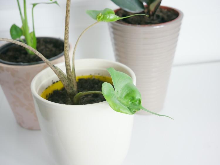 Gezondheidsvoordelen van planten: Plant Rebelz