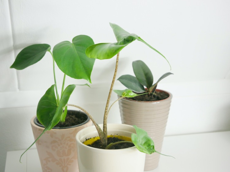 Gezondheidsvoordelen van planten